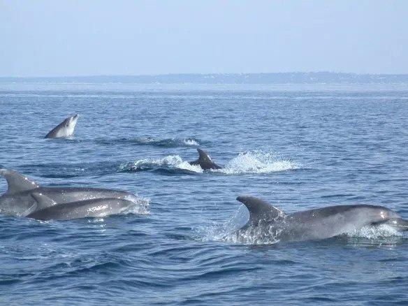 Groupe des 6 grands dauphins qui ont fréquenté le Bassin jusqu'en 2001.