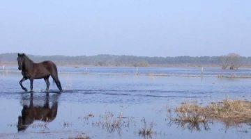 Réserve naturelle de l'étang de Cousseau