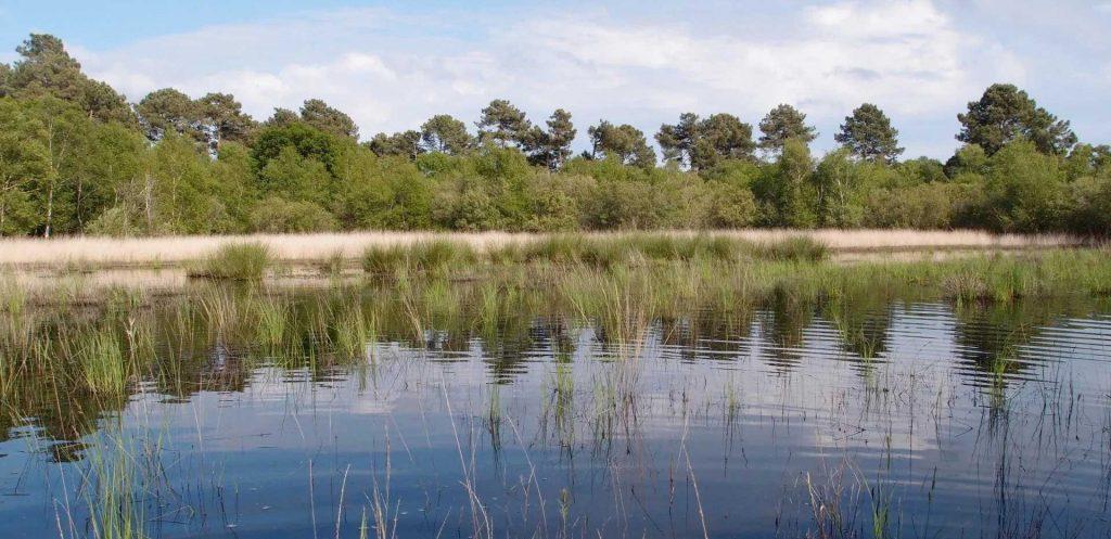 Réserve naturelle de l'étang de la Mazière