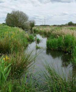 Découvrez les marais de Bruges