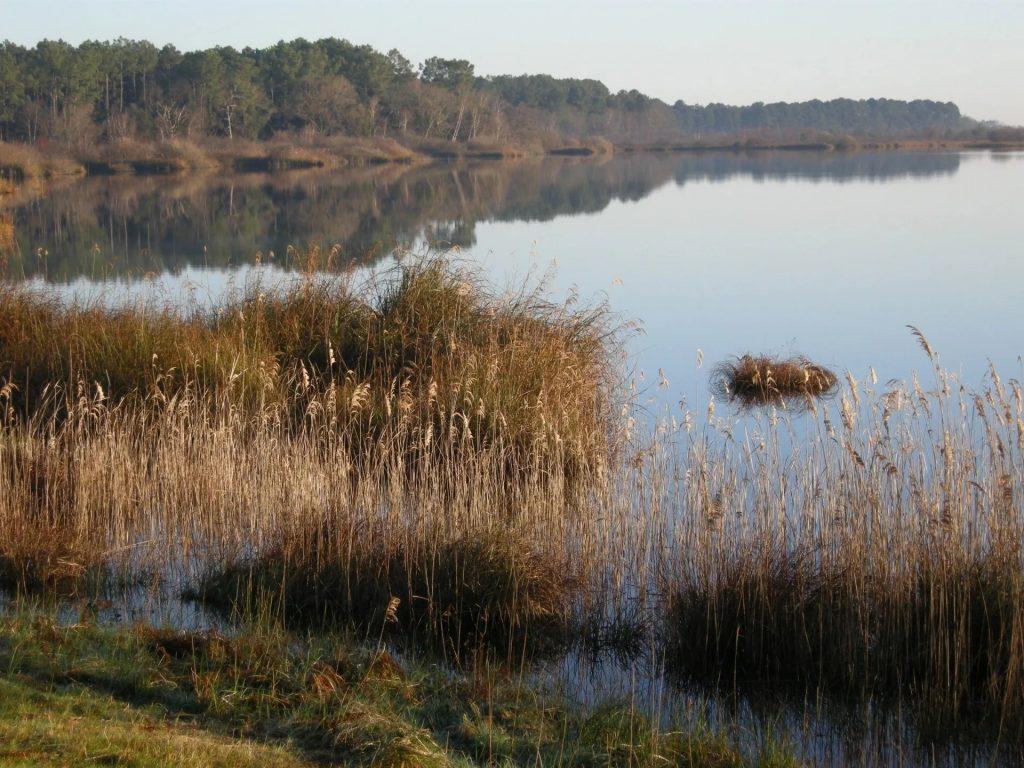 50 ha d'eau douce de l'étang de Cousseau