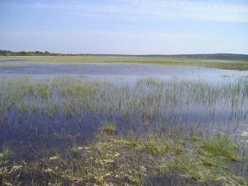 """390 ha de marais et landes humides, sur l'amorce du """"plateau landais"""""""